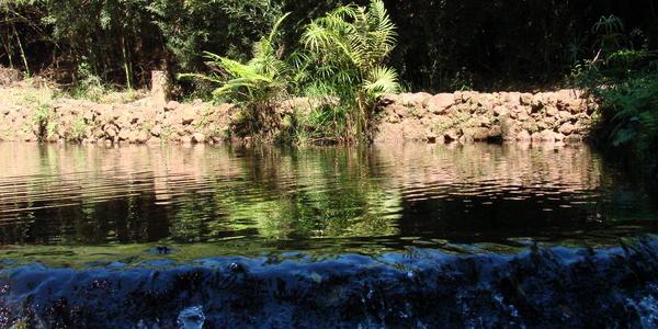 Parque das Mangabeiras - Belo Horizonte - MG