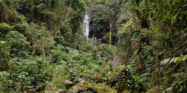 Cachoeiras e Lagos - Paraty - RJ