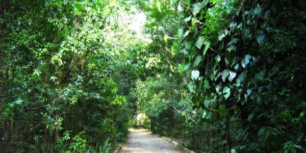 Parque do Japão - Maringá - PR