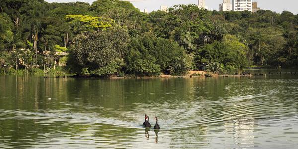 Zoológico - São Paulo - SP