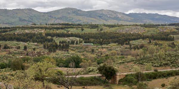 Estação Ecológica - Murici - AL