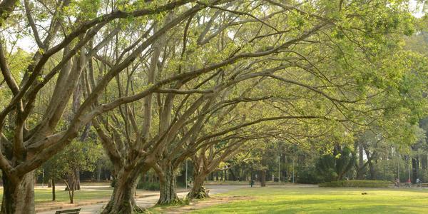 Parque do Ibirapuera - São Paulo - SP