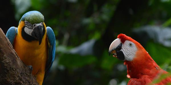Parque das Aves - Foz do Iguaçu -PR